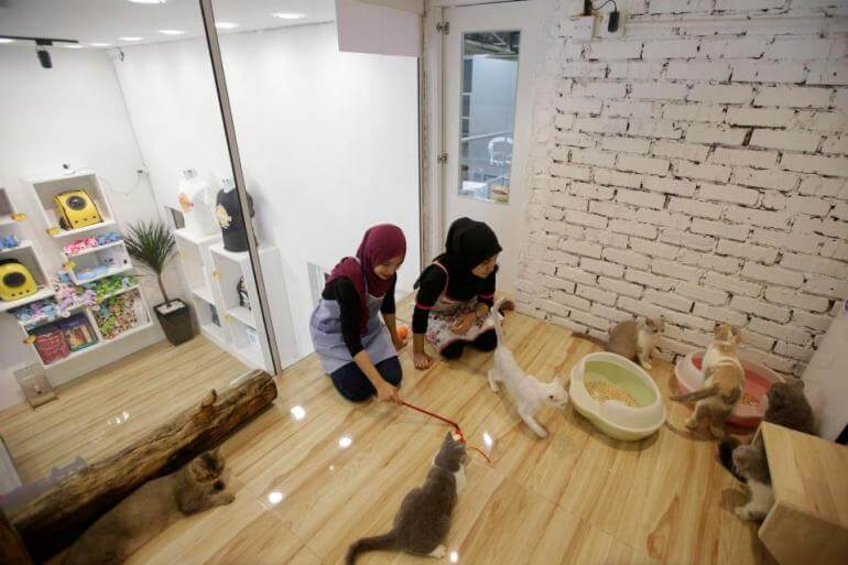 Malaysia's Catzonia Is the World's First Five Star Hotel for Cats!