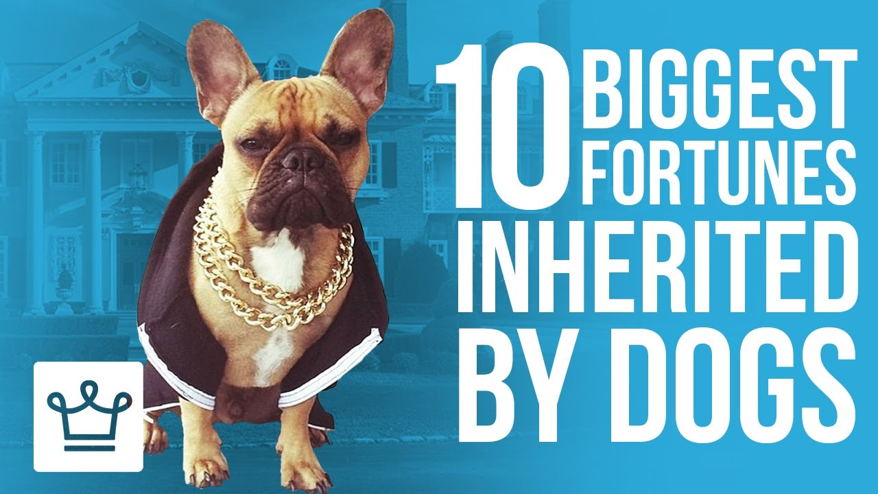Top 10 Biggest Fortunes Inherited By Dogs