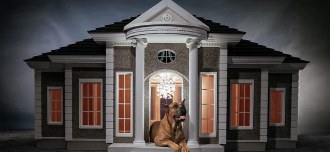 We Found the Cutest and Fanciest Dog Manors and We really Want One for Our Pet!