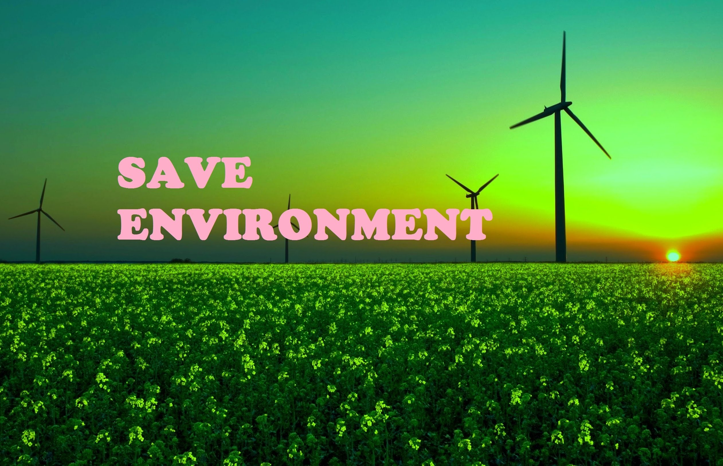 protecting the environment campaign essay Protecting the environment news find breaking news, commentary, and archival information about protecting the environment from the tribunedigital-orlandosentinel.