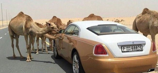 This is How the Rich Kids of Dubai Spend their Money