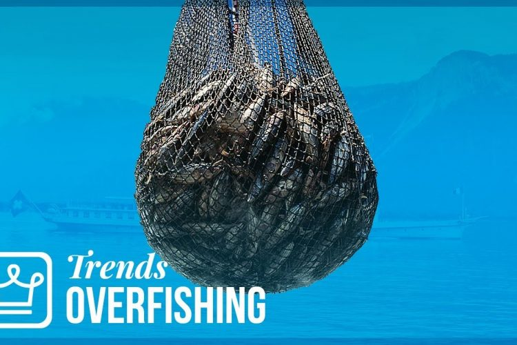 "Featured Image of the article""Overfishing: How Long Until We Run Out of Fish"""